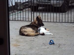 dog_2-300x224